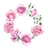För rosa för rosa te för vildblomma krans blomma i en vattenfärgstil Arkivbilder