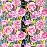 För rosa för rosa te för vildblomma modell blomma i en vattenfärgstil Arkivbilder