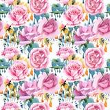 För rosa för rosa te för vildblomma modell blomma i en vattenfärgstil Royaltyfria Bilder