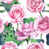 För rosa för rosa te för vildblomma modell blomma i en vattenfärgstil Fotografering för Bildbyråer