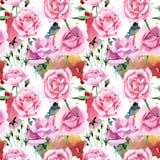 För rosa för rosa te för vildblomma modell blomma i en vattenfärgstil Royaltyfri Foto