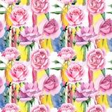 För rosa för rosa te för vildblomma modell blomma i en vattenfärgstil Arkivbild