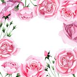 För rosa för rosa te för vildblomma ram blomma i en vattenfärgstil Royaltyfri Foto