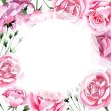 För rosa för rosa te för vildblomma ram blomma i en vattenfärgstil Arkivbild