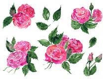 För rosblomma för vattenfärg rosa röd uppsättning för konst för gem för växt för blad för gräsplan hand isolerad dragen vektor illustrationer