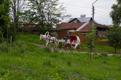 för russia för cirkel för domkyrkademetrius guld- vladimir för lopp st Suzdal Vagnshästen rider till och med gatorna av den gamla Arkivfoto