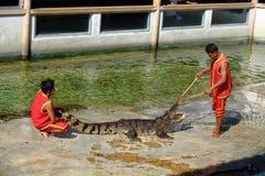 ` FÖR ` SAMUTPRAKARN, THAILAND - 25 DECEMBER 2016: Det är krokodilshowen på lantgården på 25 December 2016 i Samutprakarn, Thaila arkivbild