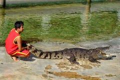 ` FÖR ` SAMUTPRAKARN, THAILAND - 25 DECEMBER 2016: Det är krokodilshowen på lantgården på 25 December 2016 i Samutprakarn, Thaila arkivfoto