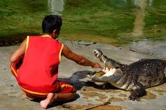 ` FÖR ` SAMUTPRAKARN, THAILAND - 25 DECEMBER 2016: Det är krokodilshowen på lantgården på 25 December 2016 i Samutprakarn, Thaila fotografering för bildbyråer