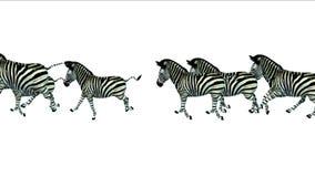 för sebrahäst för grupp 4k körning för flyttning för kontur för åsnor djur, Afrika grässlätt royaltyfri illustrationer