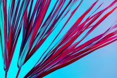 För sidabakgrund för den tropiska filialen gömma i handflatan torrt rosa blått purpurfärgat rött abstrakt begrepp för korall gräs royaltyfri bild