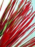 För sidabakgrund för tropisk filial torrt rosa grönt rött abstrakt begrepp att gömma i handflatan det gräs- gräsogräset arkivfoton