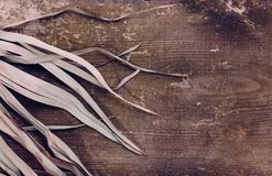 För sidabakgrund för tropisk filial torrt rosa grönt rött abstrakt begrepp att gömma i handflatan gräs- för torrt trä för gräs ga royaltyfria foton