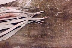 För sidabakgrund för tropisk filial torrt rosa grönt rött abstrakt begrepp att gömma i handflatan gräs- för torrt trä för gräs ga arkivfoton