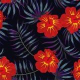 För sidamodell för hibiskus röd gul tropisk natt stock illustrationer