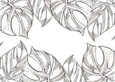 För sidavektor för sommar tropisk design Abstrakt blom- bakgrund Inbjudan eller kortdesign med djungelsidor Royaltyfria Bilder