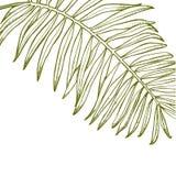 För sidavektor för sommar tropisk design Abstrakt blom- bakgrund Inbjudan eller kortdesign med djungelsidor Royaltyfri Fotografi