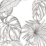 För sidavektor för sommar tropisk design Abstrakt blom- bakgrund Inbjudan eller kortdesign med djungelsidor Royaltyfri Foto