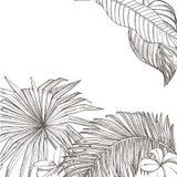 För sidavektor för sommar tropisk design Abstrakt blom- bakgrund Inbjudan eller kortdesign med djungelsidor Arkivfoton