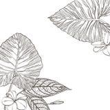 För sidavektor för sommar tropisk design Abstrakt blom- bakgrund Inbjudan eller kortdesign med djungelsidor Fotografering för Bildbyråer
