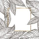 För sidavektor för sommar tropisk design med den guld- ramen Abstrakt blom- bakgrund Inbjudan eller kortdesign med Fotografering för Bildbyråer