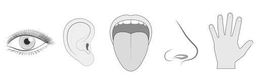 För siktutfrågning för fem avkänningar handlag för lukt för smak royaltyfri illustrationer