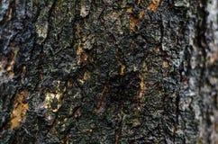 För skälltextur för mörk brunt ram över huvud taget royaltyfri fotografi