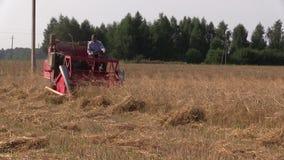 För skördvete för bonde bondaktiga växter med den lilla röda sammanslutningen lager videofilmer