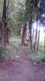 För skog alla stora träd av dem arkivbild