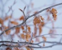 För skogvinter för landskap tre vit för säsong för natur för snö Arkivfoto
