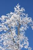 för skysnow för bakgrund blå räknad tree Royaltyfri Bild