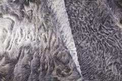 För slut för grå färgpäls upp modell för får Arkivbilder