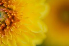 för slut för gulingblomma upp bakgrund för abstrakt begrepp Arkivfoton