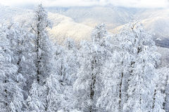 För snöig härligt sceniskt landskap bergskog för vinter räknade snowtrees Arkivfoton