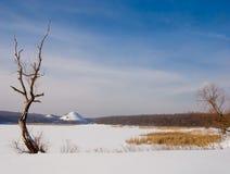 för snowtree för liggande ensam vinter Arkivbilder