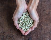 För sockerärta för handfull rikt frö arkivfoto