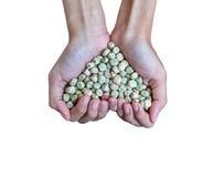 För sockerärta för handfull rikt frö (hjärtaform) arkivfoto