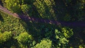 För solljus för sommar flyg- sikt för varm skog stock video