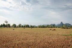 För solnedgång i södra Laos Royaltyfria Bilder