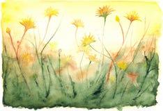 För solsken för vattenfärg gult landskap för fält för maskrosor Royaltyfri Fotografi