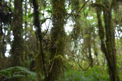 För solskenskog för grön skog naturliga träd fotografering för bildbyråer