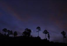 För soluppgång i skog Arkivfoton