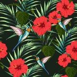 För sommarmodell för härlig sömlös vektor blom- bakgrund med kolibrin, röda hibiskusblommor och palmblad vektor illustrationer