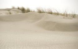 För Spiekeroog för naturlig reserv ö för Frisian Tyskland royaltyfri bild