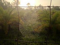 För spindlar hörn lite av världen Royaltyfri Fotografi