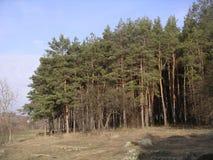 för sportfjäder för vandringsled leka trä royaltyfria bilder