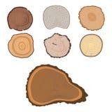 För stamskivan för trädet klippte den wood cirkeln för textur den träskogen för år för växten för råvaravektordetaljen texturerad Royaltyfri Fotografi