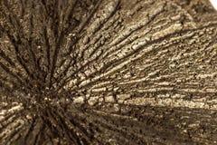 För stenpyrit för makro mineralisk dollar på en vit bakgrund royaltyfria bilder