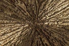 För stenpyrit för makro mineralisk dollar på en vit bakgrund royaltyfri bild