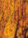 För stenvägg för bakgrund naturlig våt orange textur Royaltyfri Fotografi